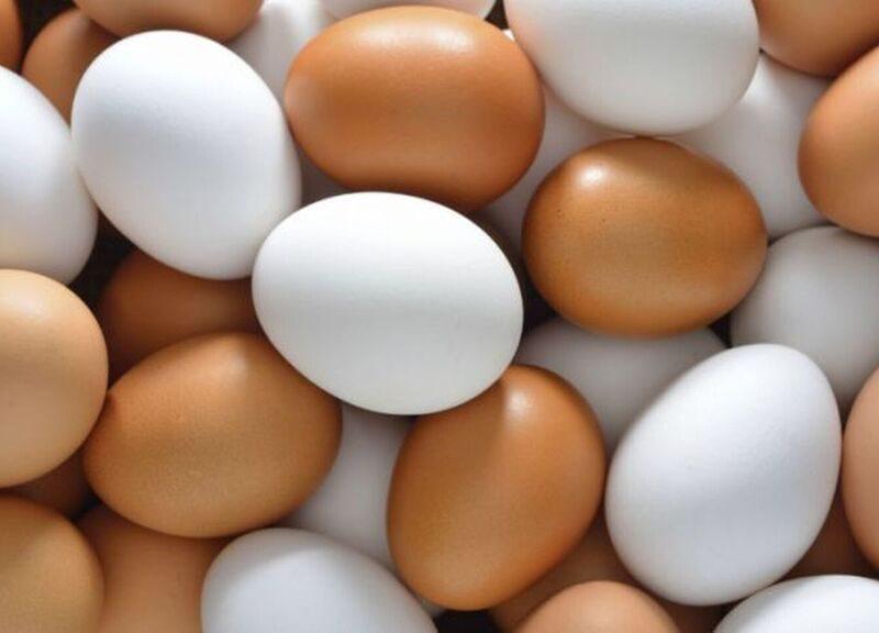 El huevo, una mina de beneficios ¡Descúbrelos!